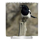Magpie   #0627 Shower Curtain
