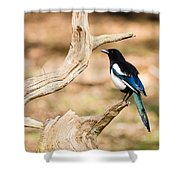 Magpie Shower Curtain