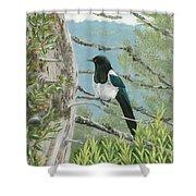 Magpie In Alaska Shower Curtain