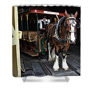 Main Street Horse And Trolley Shower Curtain