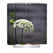 Maine Flora Shower Curtain