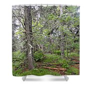 Maine Forest Shower Curtain