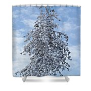 Maine Winter 2013  Shower Curtain