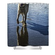 Maisie At The Beach Shower Curtain