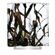 Maize Shower Curtain