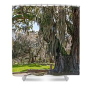 Majestic Live Oak Tree Shower Curtain