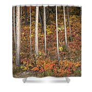 Majestic Autumn In The Grand Tetons Shower Curtain