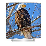Majestic Bald Eagle Shower Curtain by Greg Norrell