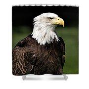 Majestic Beauty Shower Curtain