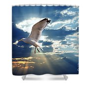 Majestic Bird Against Sunset Sky Shower Curtain