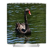 Majestic Black Swan Shower Curtain