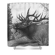 Majestic Bull Elk Shower Curtain