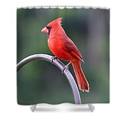 Majestic Cardinal Shower Curtain