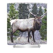 Majestic Elk Shower Curtain