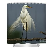Majestic Great Egret Shower Curtain