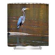Majestic Heron Shower Curtain