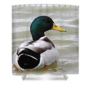 Majestic Mallard - Duck Shower Curtain
