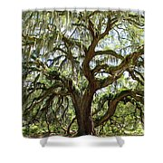 Majestic Oak 3 Shower Curtain