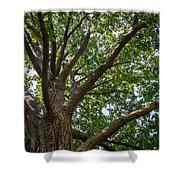 Majestic Oak Shower Curtain