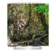 Majestic Spirit Collection 1 Shower Curtain