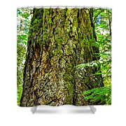 Majestic Spirit Collection 2 Shower Curtain