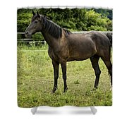 Majestic Stallion Horse In A Pasture Shower Curtain
