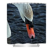 Majestic Swan Shower Curtain