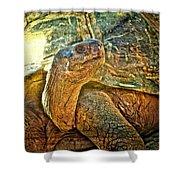 Majestic Tortoise Shower Curtain