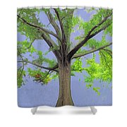 Majestic Tree With Birds Nest Shower Curtain