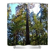 Majestic Trees Shower Curtain