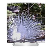 Majestic White Peafowl Shower Curtain