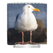 Make Sure You Get My Good Side Shower Curtain
