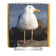 Make Sure You Get My Good Side Poster Shower Curtain