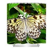 Malabar Tree Nymph Butterfly Shower Curtain