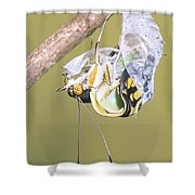 Malachite Butterfly Emerging 4 Of 6 Shower Curtain