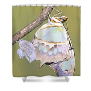 Malachite Butterfly Emerging 6 Of 6 Shower Curtain
