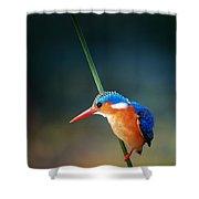 Malachite Kingfisher Shower Curtain