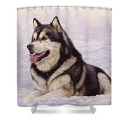 Malamute Shower Curtain by David Stribbling