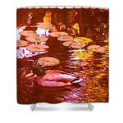 Malard Duck On Pond 3 Shower Curtain