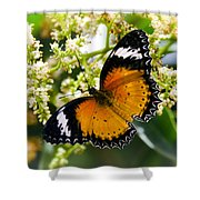 Malay Lacewing Butterfly  Shower Curtain