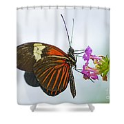 Malay Lacewing Shower Curtain