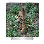 Malayan Tiger Shower Curtain