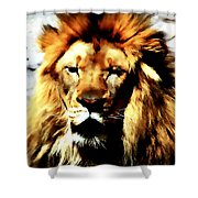 Male African Lion 2 Shower Curtain