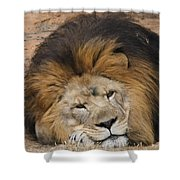 Male African Lion Shower Curtain