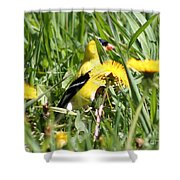 Male American Goldfinch Camouflage Shower Curtain