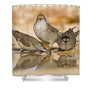 Male And Female Eurasian Blackcaps Shower Curtain