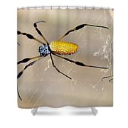 Male And Female Golden Silk Spiders Shower Curtain