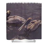 Male And Female Pelicans Shower Curtain