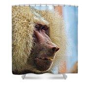 Male Baboon Shower Curtain