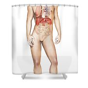 Male Body Standing, With Full Shower Curtain